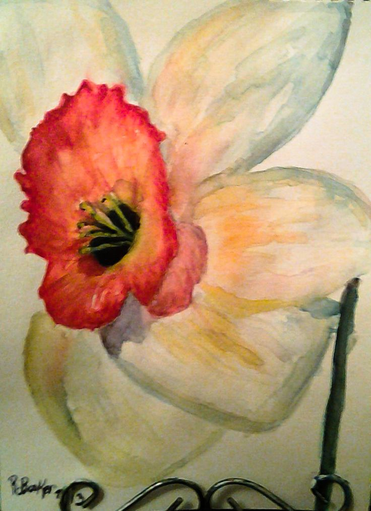 Narcissus. Watercolor on paper by Robin Booker