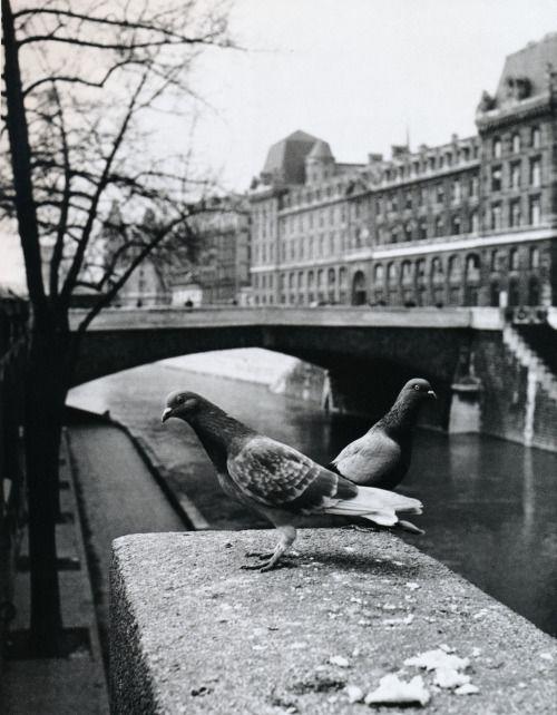 Izis Petit-Pont, Paris, 1950