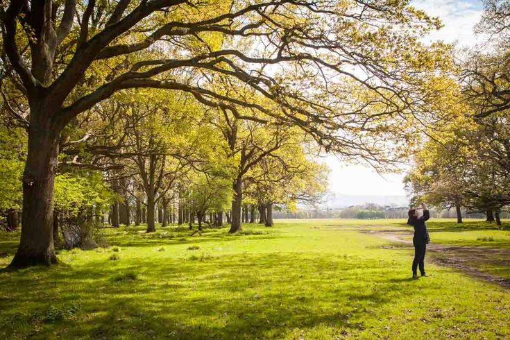 Phoenix Park in Dublin is a beautiful paradise away from the city noise. Photo: John Einar Sandvand