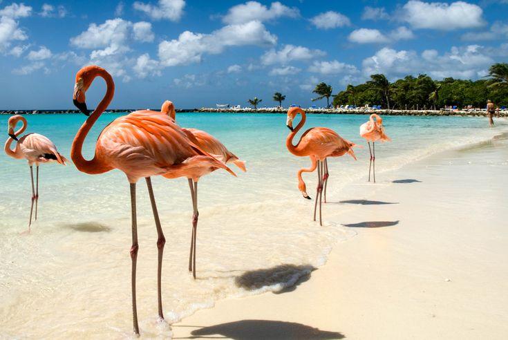 www.urlaubsguru.de wp-content uploads 2016 06 flamingos-on-the-beach-istock_8252068_large-2.jpg