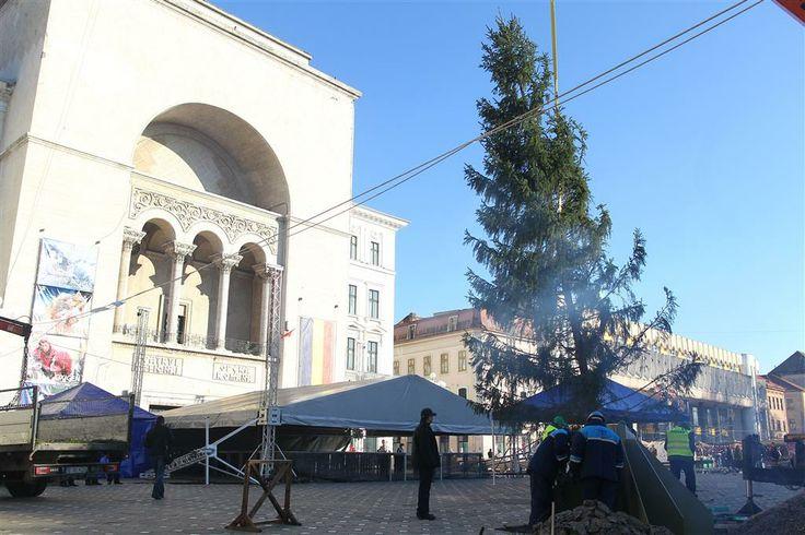 Premiera la Timisoara – brad de Craciun instalat in Piata Operei