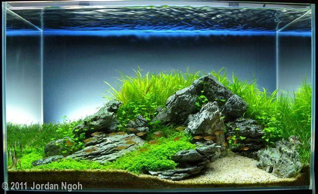 2011 AGA Aquascaping Contest - Entry #259