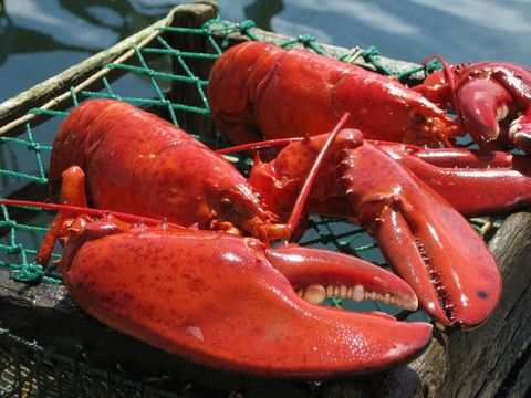 Catch a Piece of Maine | Buy the Best Maine Lobster Online * Live Lobster, Tails, Fresh Picked Lobster Meat, New England Rolls & More * the Freshest Lobster shipped Overnight * We Catch. We Ship. You Eat.