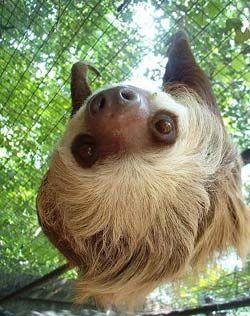 i wanna go to costa rica sooooo badly to help rehab these sweet, beautiful creatures...