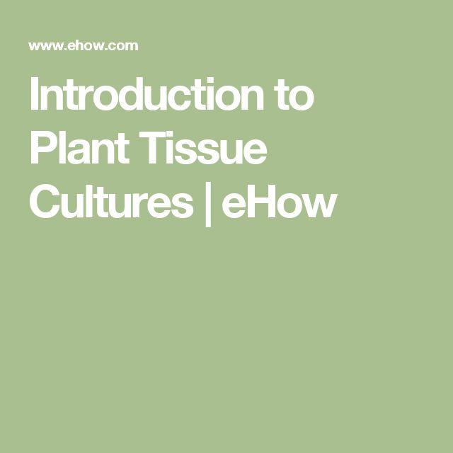 Elegant Introduction to Plant Tissue Cultures