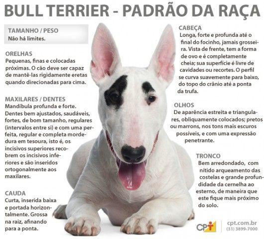 Padrão da raça Bull Terrier
