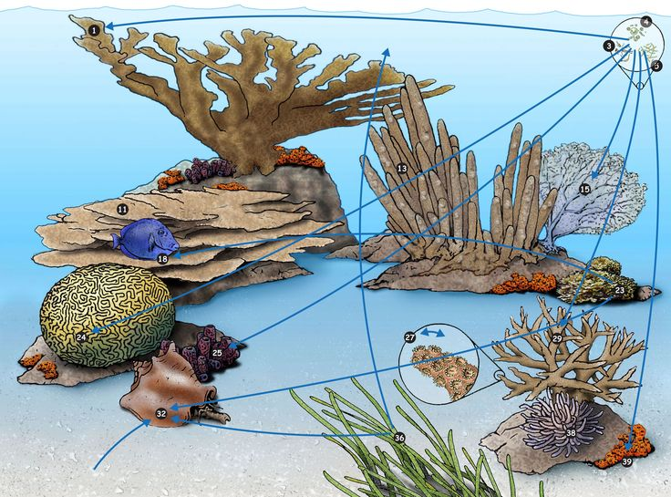 the 25 best coral reef food web ideas on
