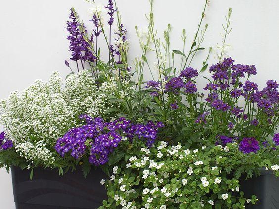 Balkon Gestaltung mit weißen und blaun Pflanzen