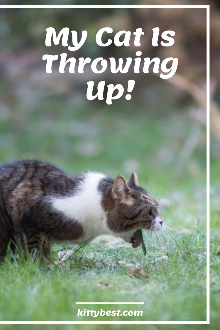 Help my cat is throwing up 8 causes with solutions