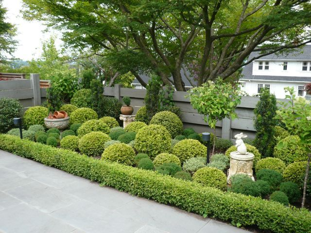1000 images about low maintenance shrubs on pinterest for Low maintenance border shrubs