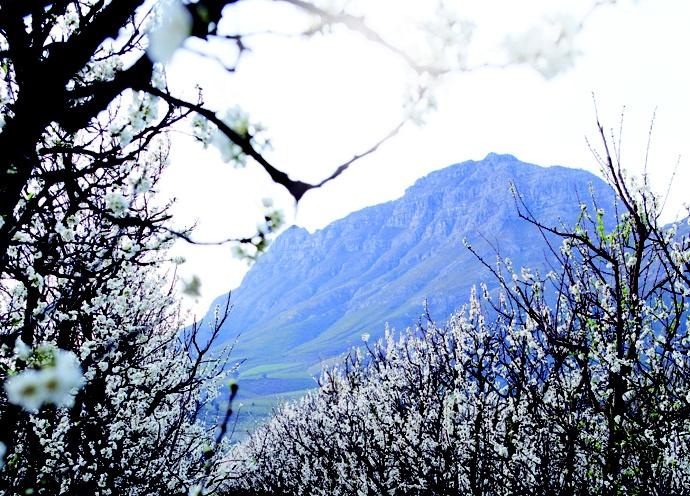 Bartinney wine farm, Stellenbosch