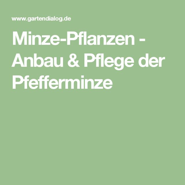 25+ Best Ideas About Minze Pflanzen On Pinterest | Minz-blumen ... Magnolie Als Zimmerpflanze Legende Arten Pflege