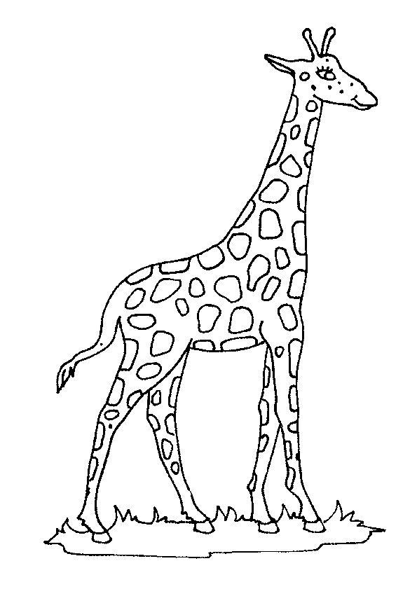 Dessin à colorier d'une belle girafe