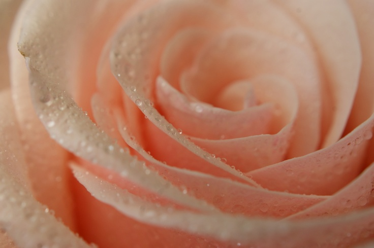 Baby pink by Beatrix Karina, via 500px