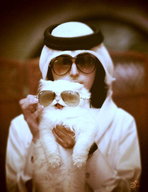 Khaleeji kitteh, so cute