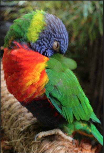 lori arcoiris