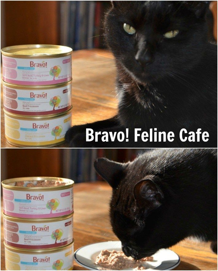 Bravo Canned Cat Food Reviews
