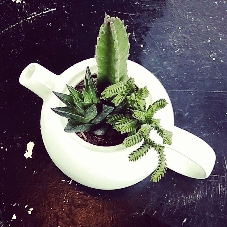 Pondríamos suculentas en todos lados! #tiendaverdeamor #rinconverde #sucuamor #teatime #succulentseverywhere