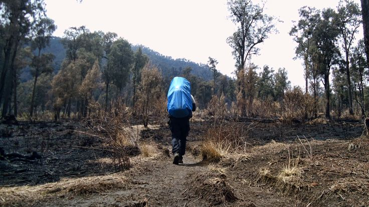 Forest Fire , Our Majestic National Forests ....
