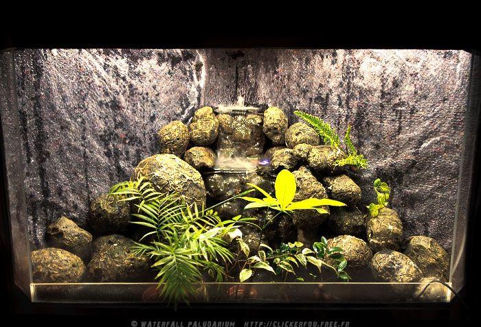 Waterfall Paludarium Creating A To Z Fairy Garden