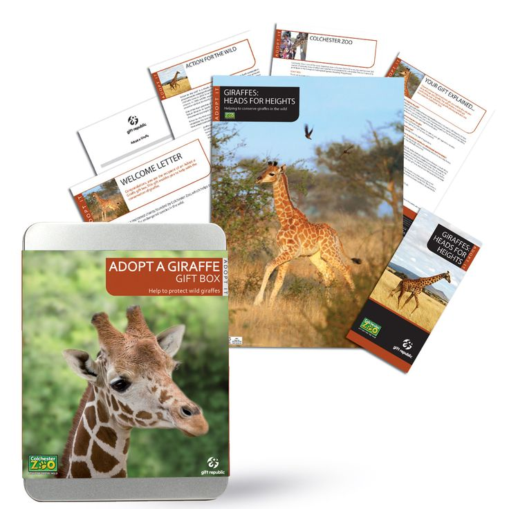 I Just Love It Adopt a Giraffe Adopt a Giraffe - Gift Details. Support Colchester Zoo?s charity Action for the Wild with their ongoing efforts to preserve and protect the world?s tallest animal by adopting a giraffe for 12 months http://www.MightGet.com/january-2017-11/i-just-love-it-adopt-a-giraffe.asp