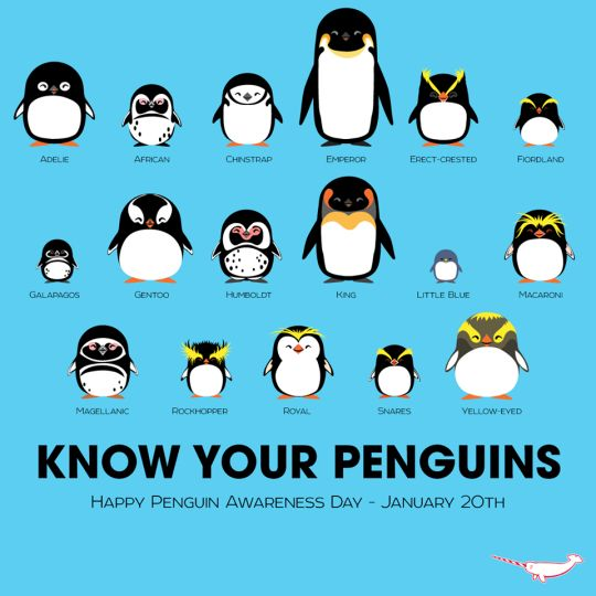 emperor penguins are my favorite