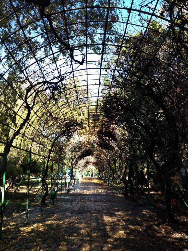 Parque Juan XXIII- Ñuñoa- Santiago - Chile