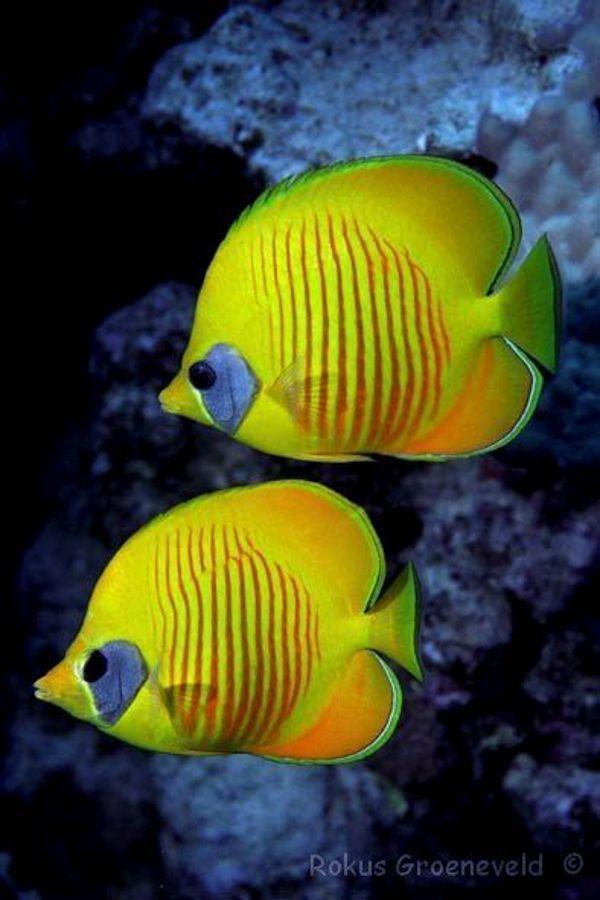 Saltwater Aquarium Ebook