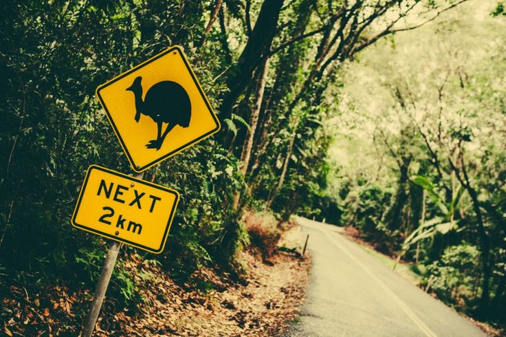 You will see signs like this one when you are driving along the Cassowary Coast. The ultimate road trip through tropical North Queensland! #TNQ #natureandwildlife #adventure #roadtrip #cassowaryspotting #travel