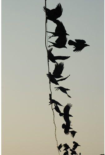 """""""Crow 104"""", Meggan Gould"""