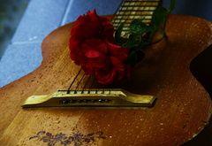 chitarra carta da parati, rosa, gocce, fiore, stringa