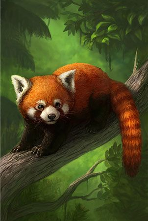Illustration of a Red Panda in the forest
