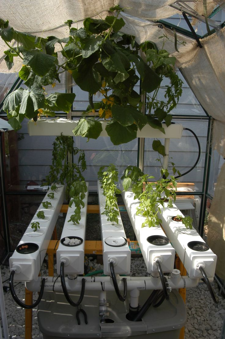 17 Best Hobby Greenhouse Gardening Images On Pinterest