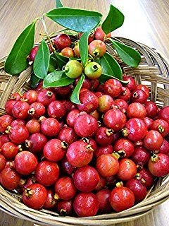 #Uses_of_Strawberry_Guava :  #Cattley_guava, #Peruvian_guava, #Purple_guava, #Cherry_guava, #Chinese_guava, #Guayaba  Strawberry Guava appears to be dark red in color which tastes similar to strawberry. The pulp of the fruit will be juicy with a semi-transparent texture.  Though the fruit haves a rich sweet flavour, it is used in the preparation of #jams and #jellies.  Its leaves play a vital role during tea preparation.SEE MORE https://goo.gl/i5OS1L