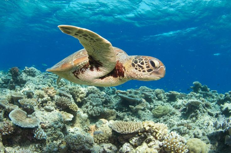 Backpacking Queensland: Explore the Great Barrier Reef