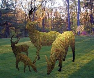 oh deer my dear... topiary landscape design