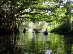 4 Florida Kayak trips that are not famous but should be - Imperial River kayak trip, Bonita Springs