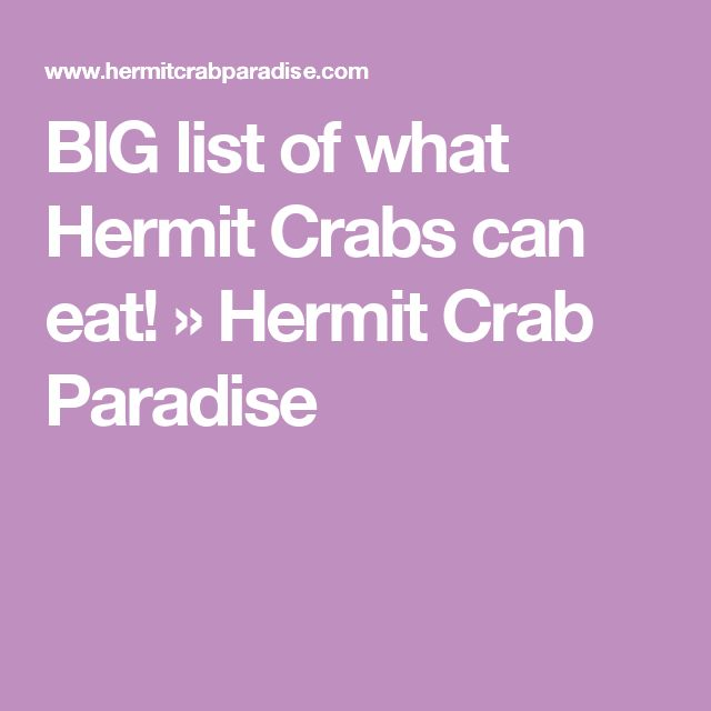 BIG list of what Hermit Crabs can eat! » Hermit Crab Paradise