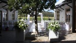 Cassia - Durbanville