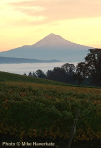 Stoller Vineyard, Oregon- Mt. Hood in the distance