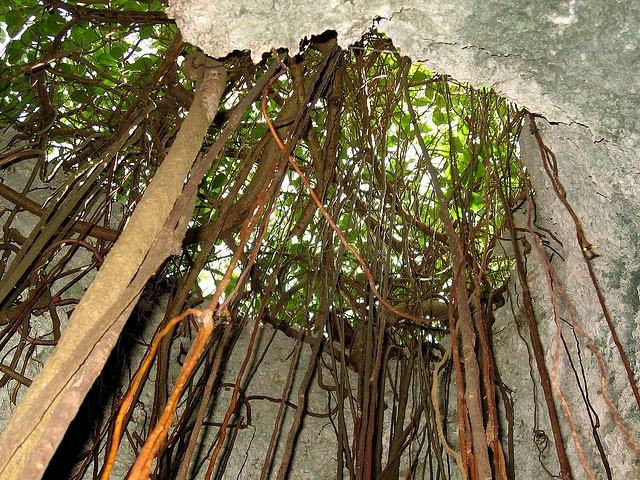 71 Best Cayman Brac Images On Pinterest Cayman Islands
