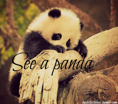 I saw a red panda <3 I love pandas so much I even have a panda pillow pet!....I hate that they're going extinct :(