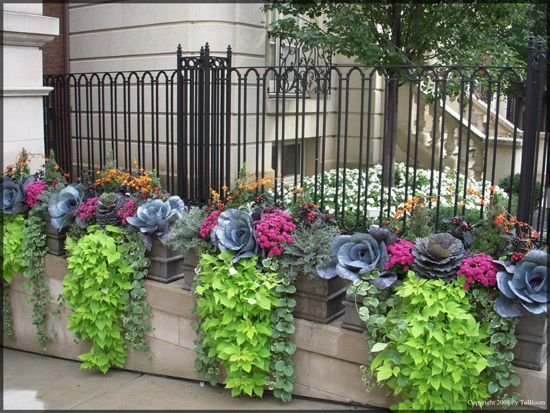 25 best ideas about Fall container gardening on PinterestFall