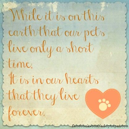 While it is on this earth that our pets live only a short time, It is in our hearts that they live forever.