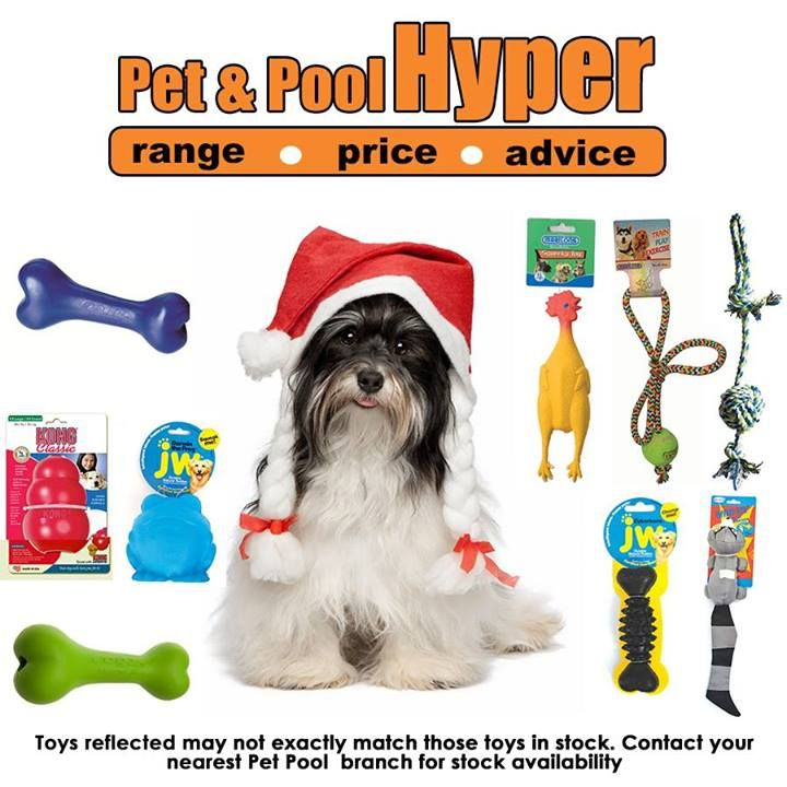 Spoil your dog this festive season with great assorted toys available from Pet & Pool Hyper Boksburg. Toys reflected may not exactly match those toys in stock. Contact your nearest Pet Pool branch for stock availability #Christmas #doggytoys