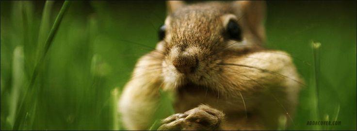 Cute Squirrel Facebook Covers, Cute Squirrel FB Covers, Cute Squirrel Facebook Timeline Covers, Cute Squirrel Facebook Cover Images