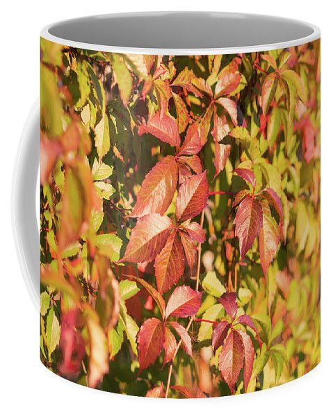 Mariia Kalinichenko Coffee Mug featuring the photograph Autumn Leaves Of Maiden Grapes by Mariia Kalinichenko #MariiaKalinichenkoFineArtPhotography #CoffeMug #Autumn #HomeDecor #FineArtPhotography