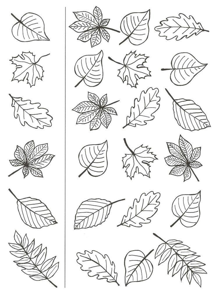 Coloriage Automne Enfant Et Adultes Adultes Automne Coloriage Enfant Herbst Vorschule Herbstbastelprojekte Herbst