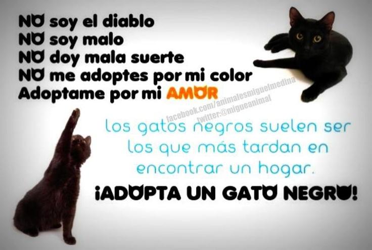 adopta un gatito negro Pues yo adopté a Jumbie por negro<3