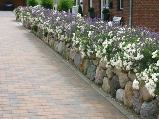 Fint med växter som väller över en stenmur